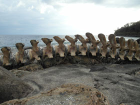 Whale bones on the beach, Lamalera, Indonesia